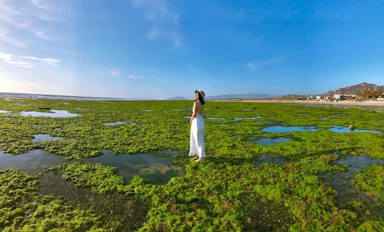 Cánh đồng rong biển tuyệt đẹp tại Ninh Thuận