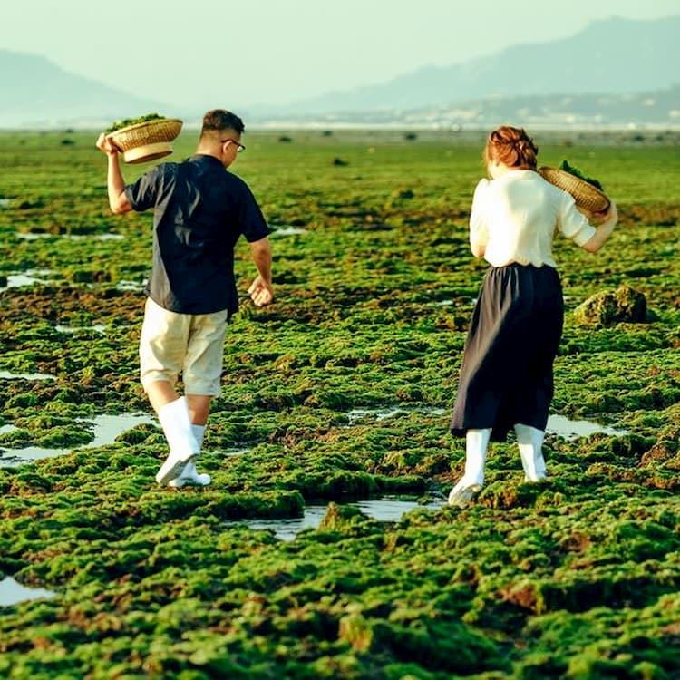 Check in tại cánh đồng rong biển Ninh Thuận