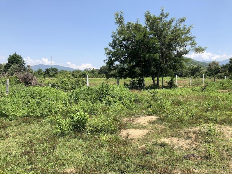 Đất trồng cây hàng năm khác huyện Bác Ái